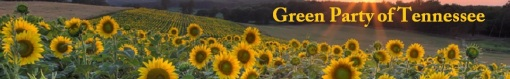 field-of-sunflowers-gptn